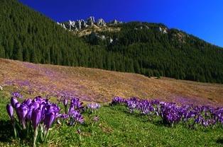 Dolina Chochołowska Zakopane - Tatry